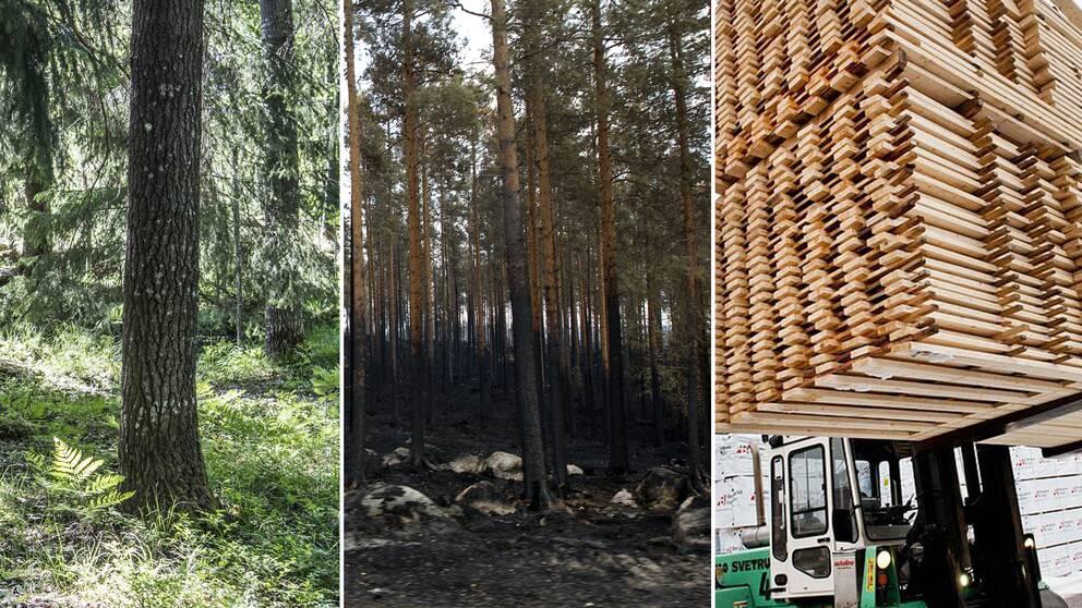 Svenska trävaror står för 10 procent av Sveriges export och efterfrågan är stor även på papper och massa.