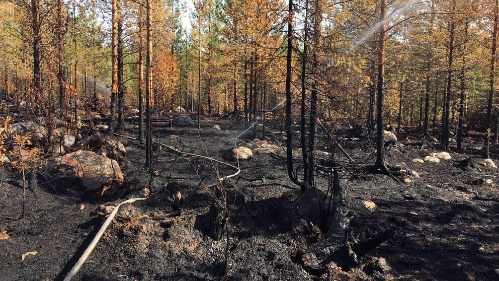 Skogsbrand Jokkmokk