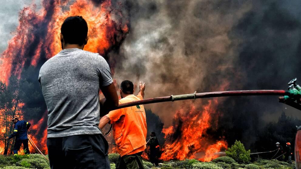 Brandmän kämpar mot elden i byn Kineta i närheten av Aten.