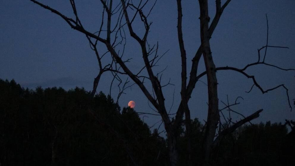 Månen fotad av Margaret Hallman i Frövi nordost om Örebro.