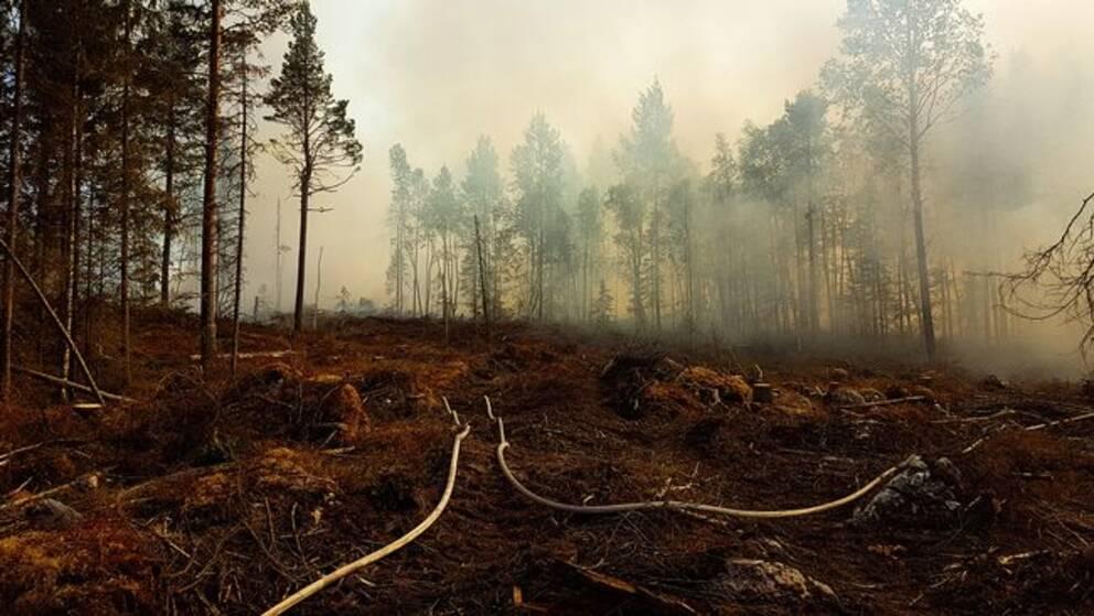 Lugnare brandläge – storbränder under kontroll