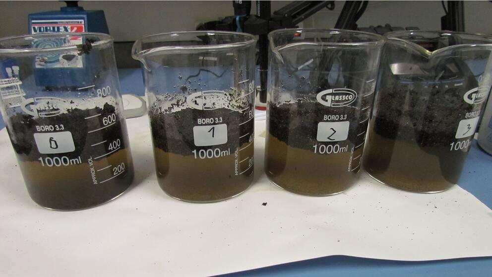 Labtester med odling av mikroorganismer har visat att olja kan brytas ner på kort tid.