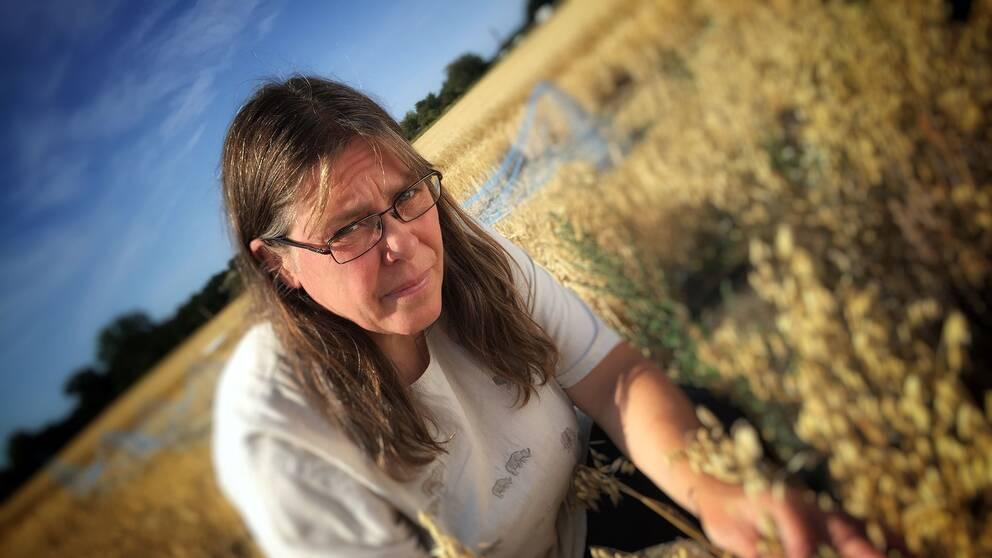 Eva Johansson, professor i jordbruksvetenskap, vid Sveriges lantbruksuniversitet i Alnarp står böjd ute i ett havrefält och tittar in i kameran med glasögon.