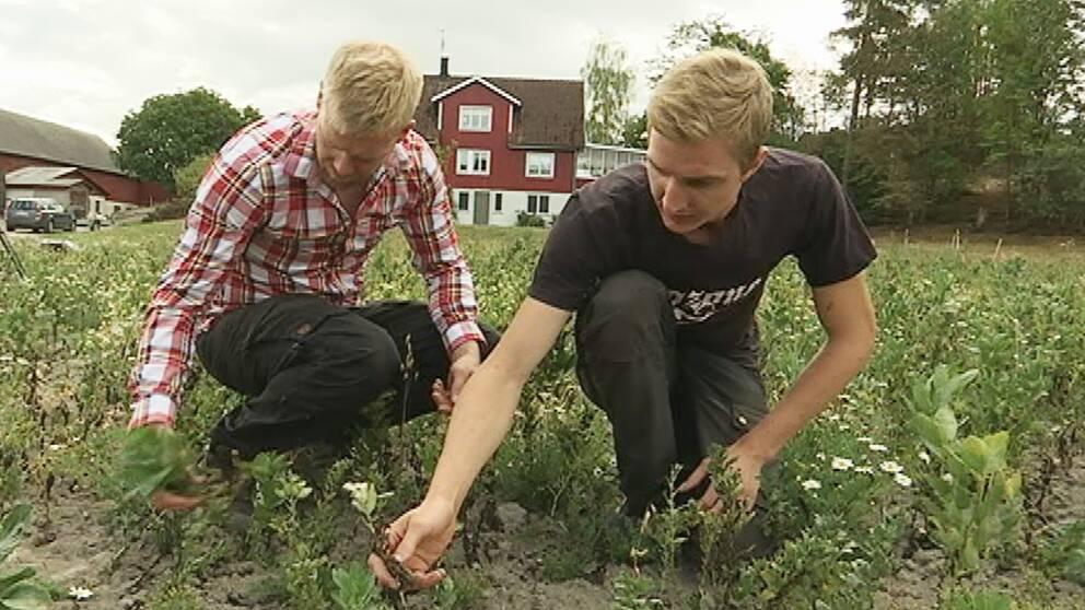 Eko-bönder i Värmland