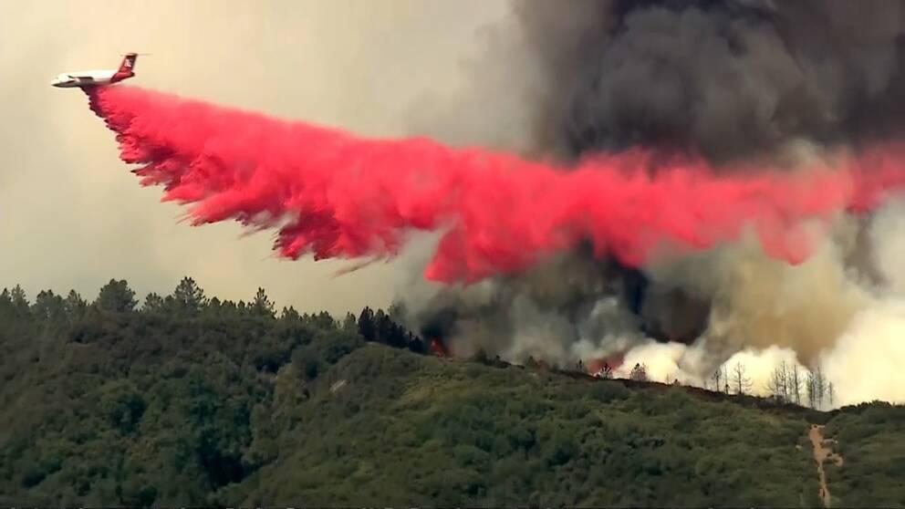 Brandflygplan släcker skogsbrand i Kalifornien.
