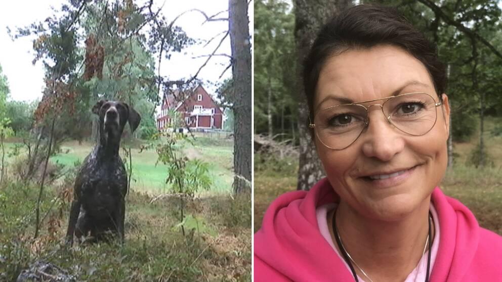 dubbelbild: hund sittande i skogsbryn med röd stuga i bakgrunden / porträtt på kvinna med glasögon och rosa hoodie