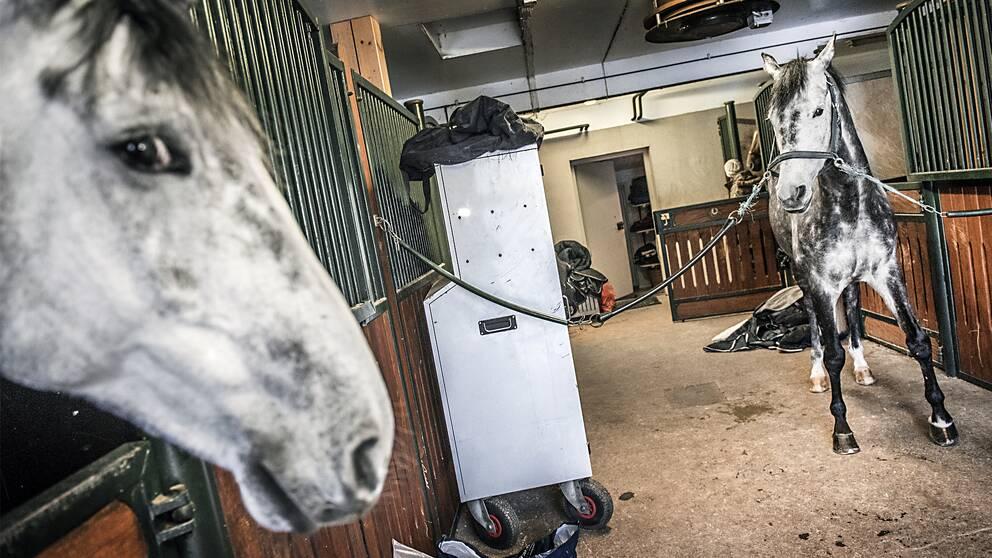 häst, stall, ridklubb, ryttare