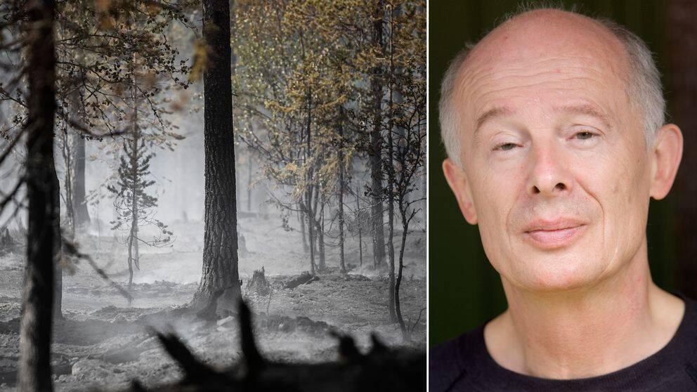 Död skog vars mark är täckt av aska, samt Hans Joachim Schellnhuber.
