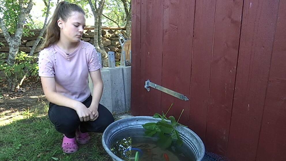 Evelin Engman hoppas lägga tillbaka fiskarna i dammen inom kort.
