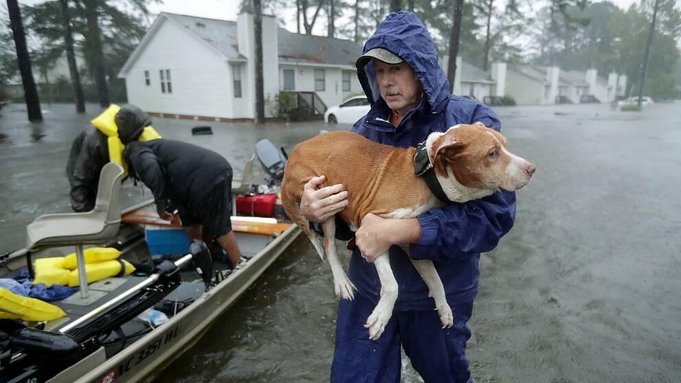 En man räddar en hund när stormen Florence slår till i USA.