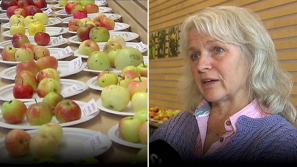 dubbelbild: äpplen på fat med namnskyltar samt porträtt på kvinna med långt grått hår och stickad kofta