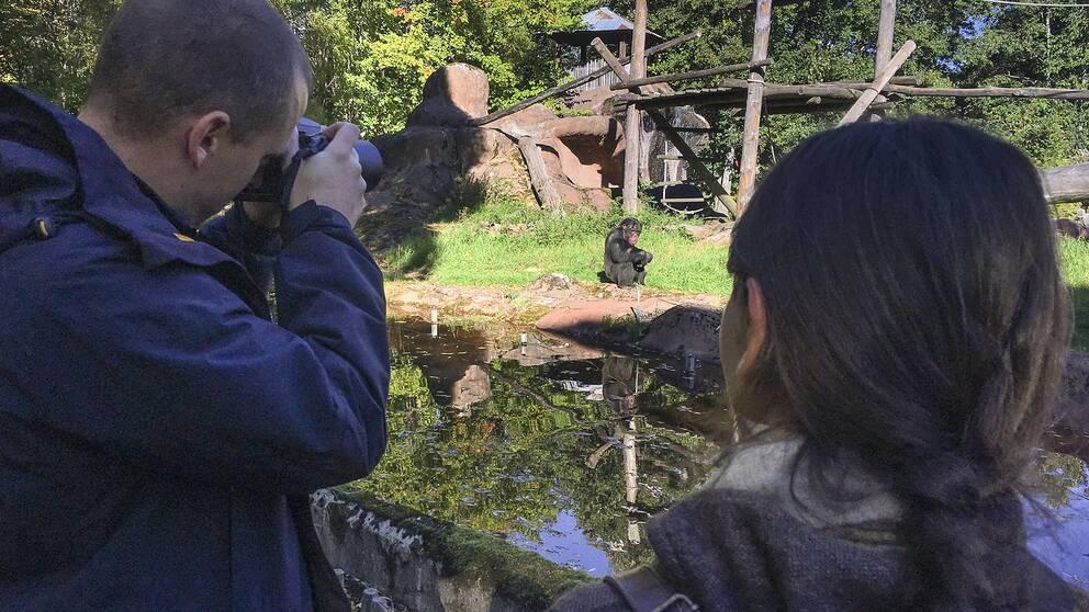 Forskaren Tomas Persson fotograferar en schimpans tillsammans med sin kollega Gabriela-Alina Sauciuc.