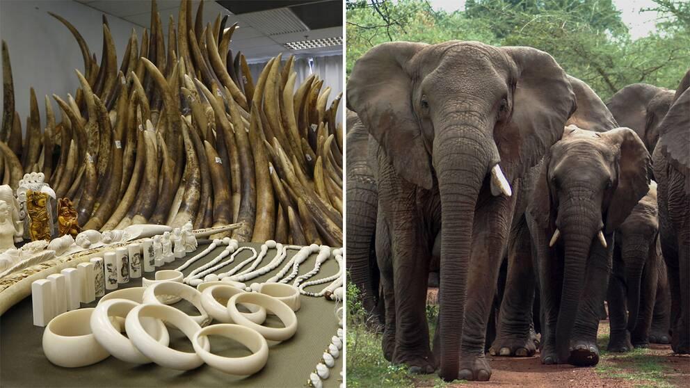 Elfenben och elefanter