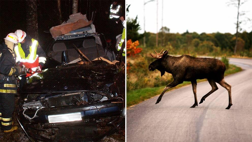 Vid den här olyckan 2004 omkom en man efter att ha kolliderat med en älg.