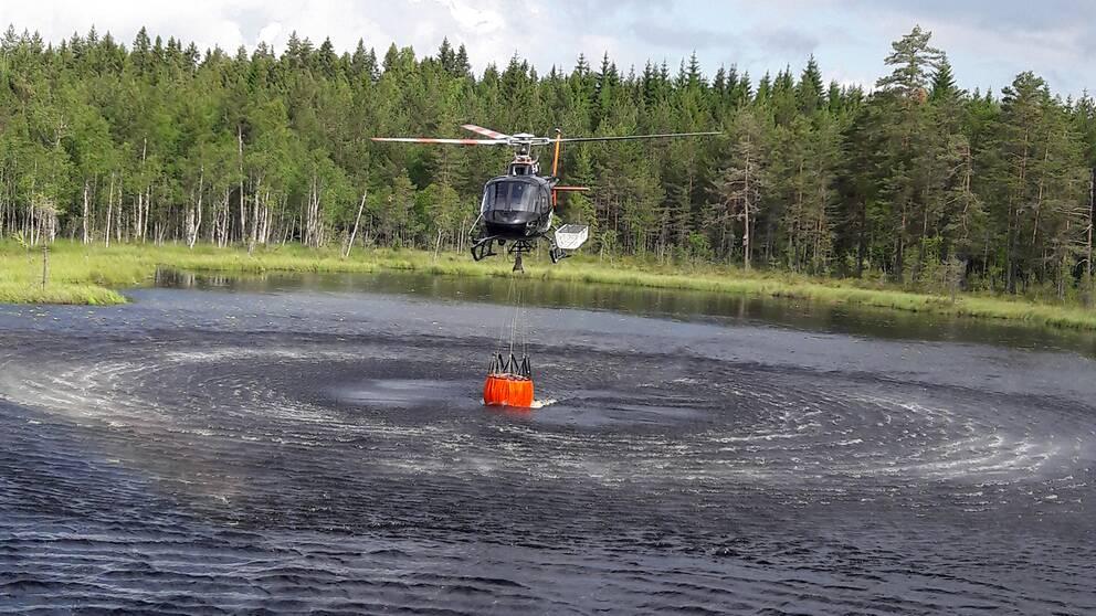 helikopter hovrar över skogssjö och fyller vattenkasse för vattenbombning