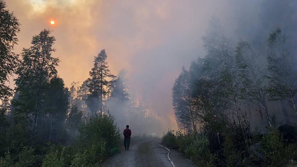 person på skogsväg, brandrök förmörkar solen