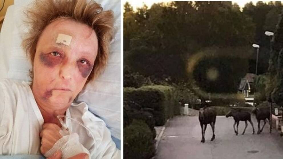 Elisabeth Ejnell blev attackerad av en älg.