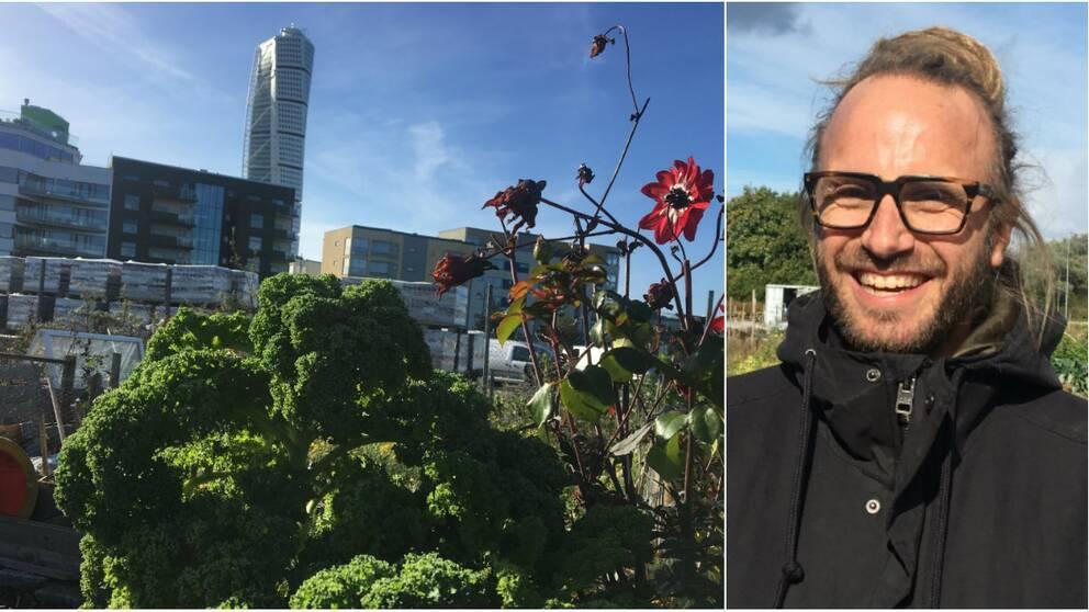 Stadsbonden Göran Claesson säljer sina grönsaker vidare till restauranger och privatkonsumenter.