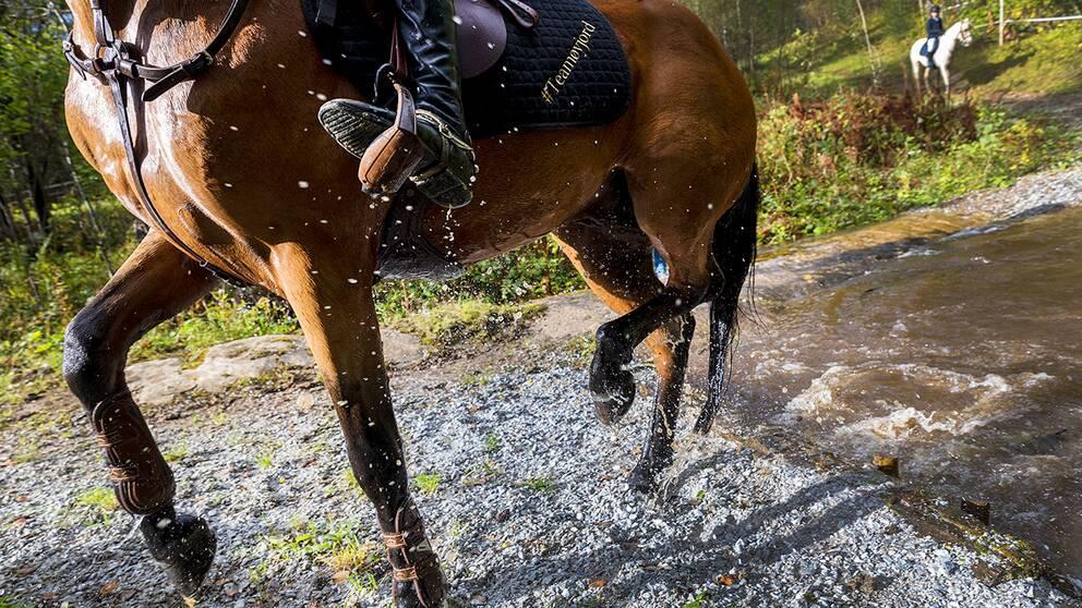 Missin People i Kronoberg organiserar ryttare med hästar för att kunna leta efter försvunna personer.