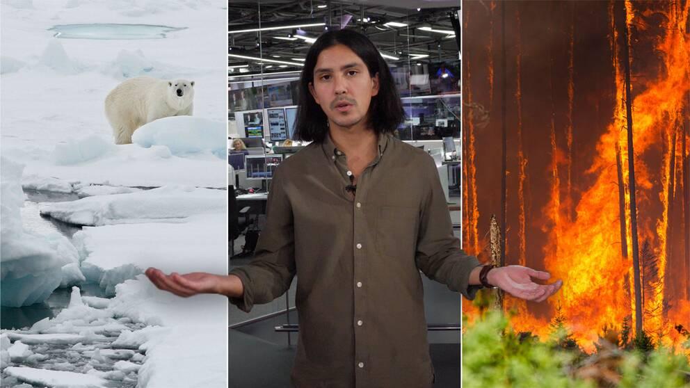 Isbjörn i arktis och brinnande skog i USA, med SVT:s reporter Aldo Sartori i mitten