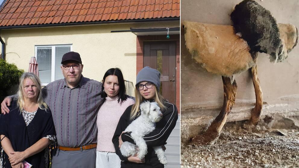 Familjen Brobeck till vänster, närbild på svamp till höger.