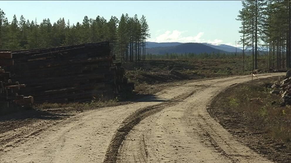 Avverkade träd vid sidan av vägen