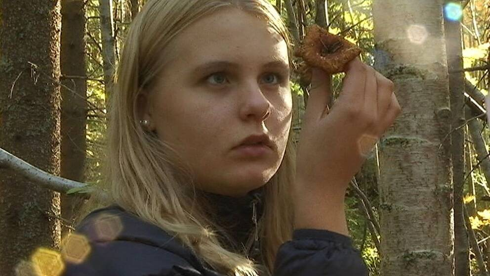 Elever forskar om cesiumhalten i svamp
