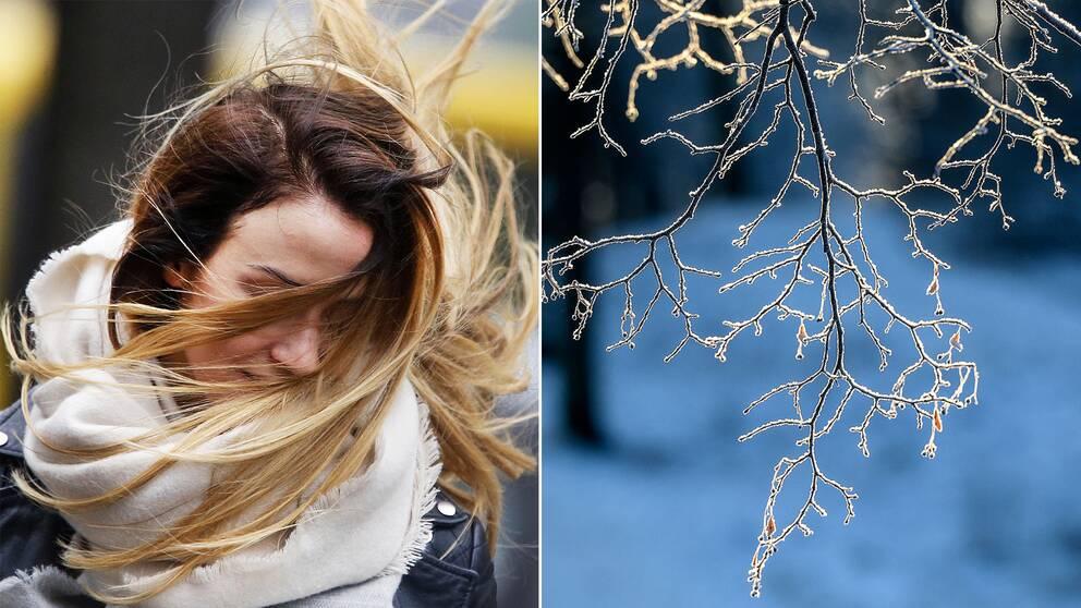 En kvinna i blåst och frostiga grenar