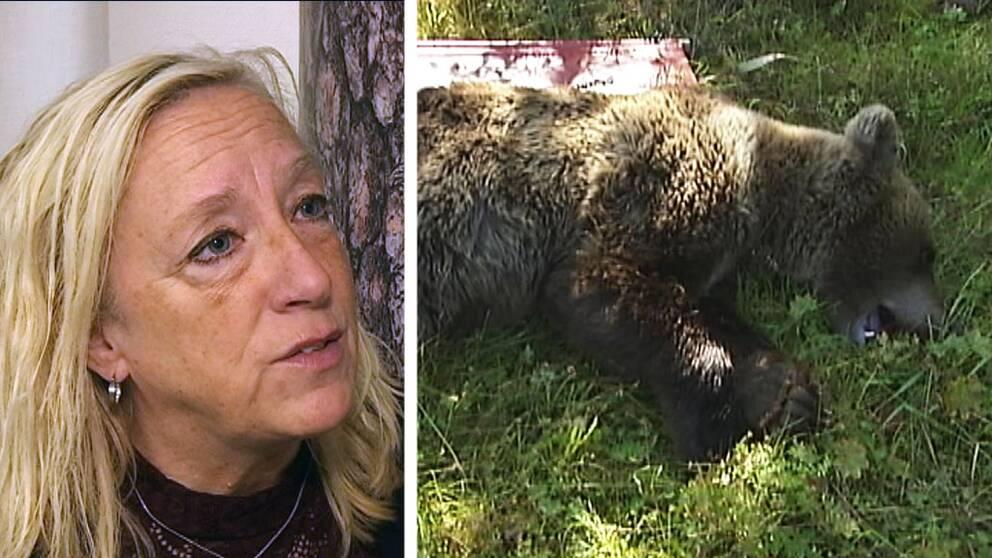 Kvinna med ljust hår till vänster och till höger bild på en fälld björn liggande i gräs.