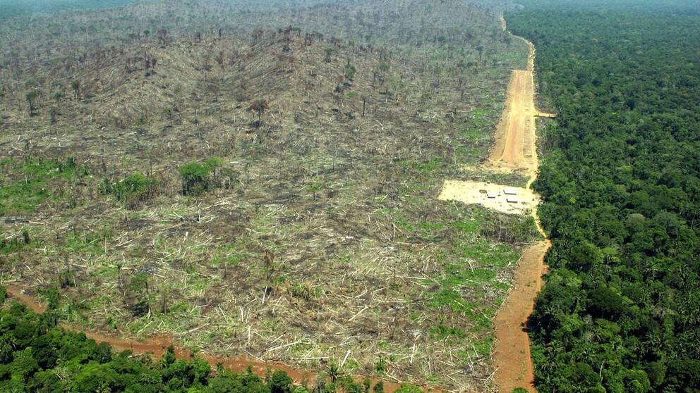 Förödelsen efter skörd av sojabönor i Amazonas.