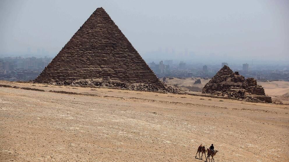 Kameler framför pyramid i Egypten.