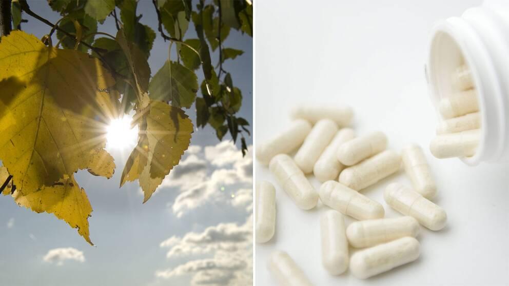 Sol, höstlöv och vitaminer