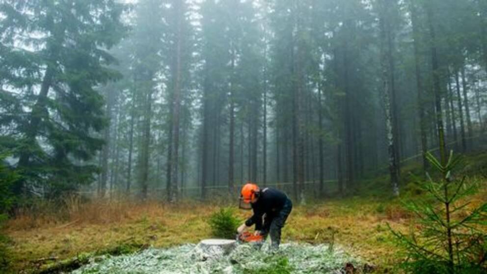 14bcf7f3 Priserna på skogsmark går upp   SVT Nyheter