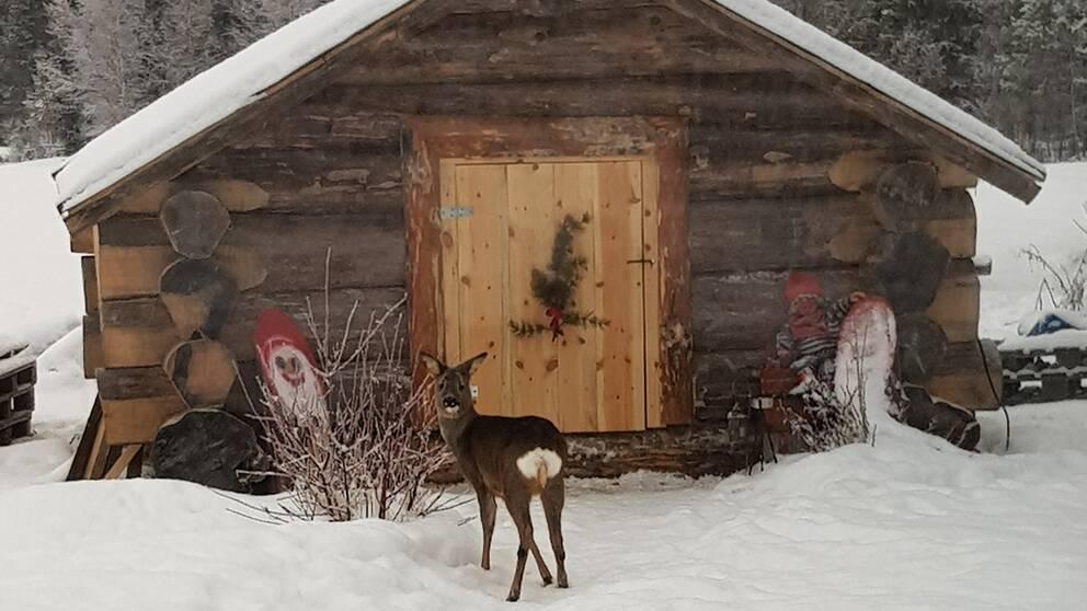 Bambi hälsar på hos Tomten.