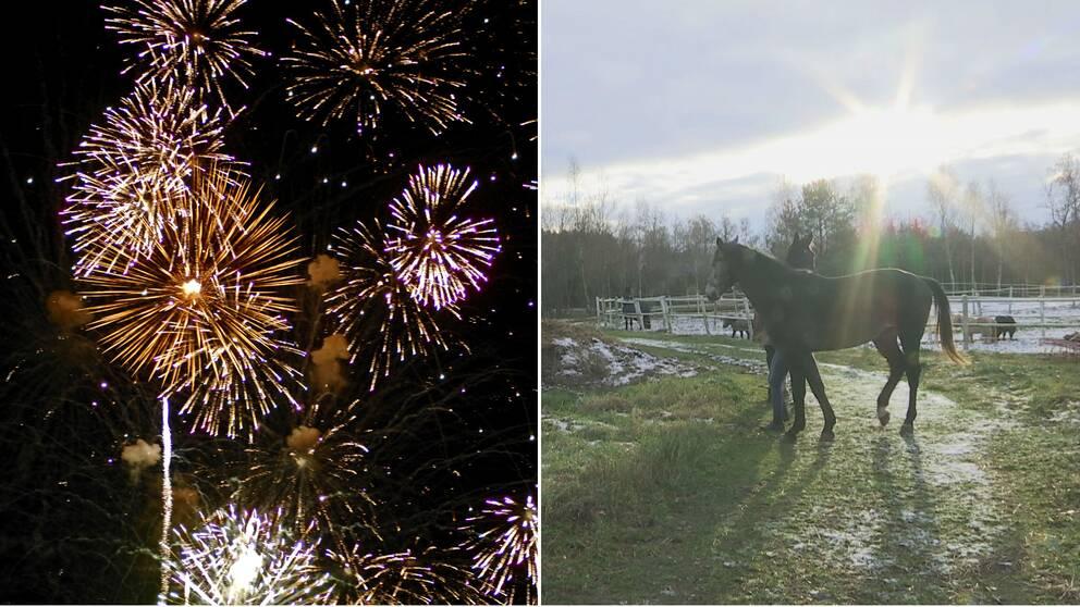 Fyrverkerier och hästar