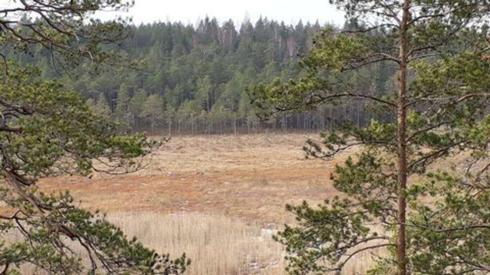 Marsjöns naturreservat i Flens kommun.