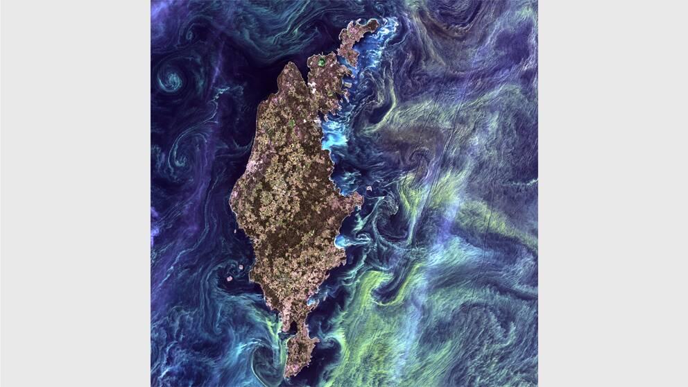 När rymdforskningsorganisationen Nasa bad allmänheten rösta fram den vackraste satellitbilden, var det Gotland som tog hem förstaplatsen. På Nasa jämför man de algblomstkoncentrerade havsvirvlarna runt den gotländska kusten med Van Gogh-målningen Starry Night.