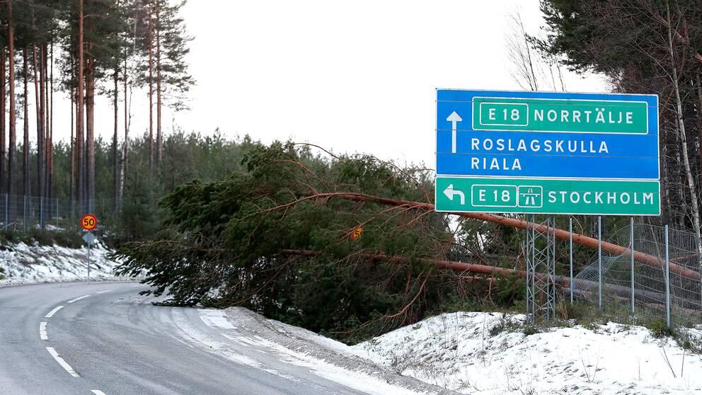 Nedfallna träd till följd av stormen Alfrida på Rialavägen mellan E 18 och Finsta.