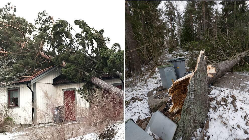Träd som fallit på hus