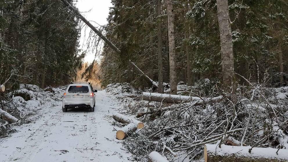 Träd som fallit över en väg i skogen efter stormen Alfrida.