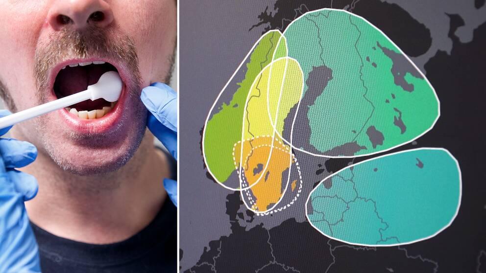 Släktforskningsföretagens DNA-kartor ger en förlegad syn på etnicitet, menar experter