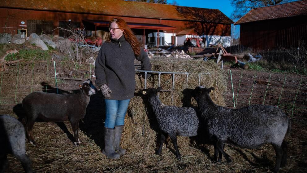 För några år sen tröttnade fårbonden Fia Söderberg på slöseriet av svensk fårull.