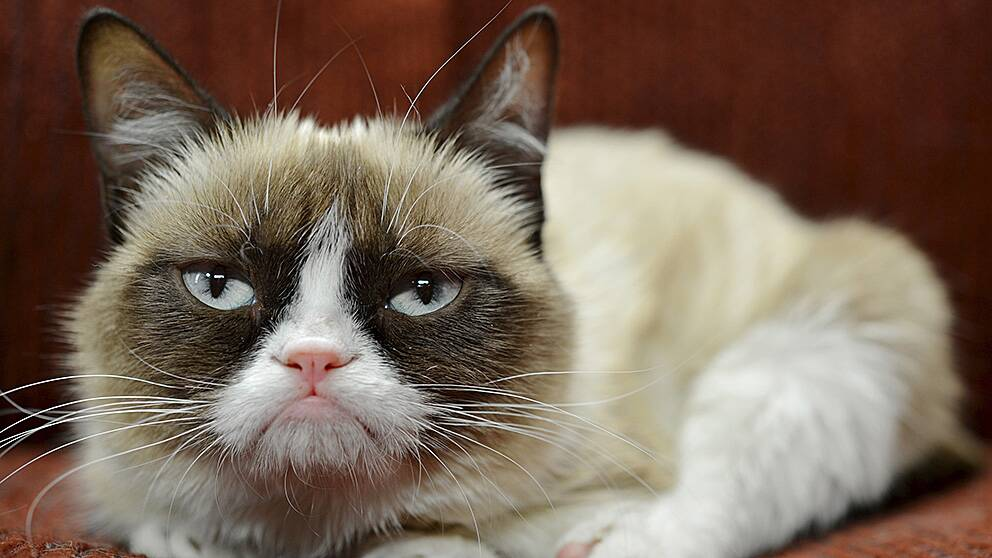 Grumpy Cat, internetkändis.