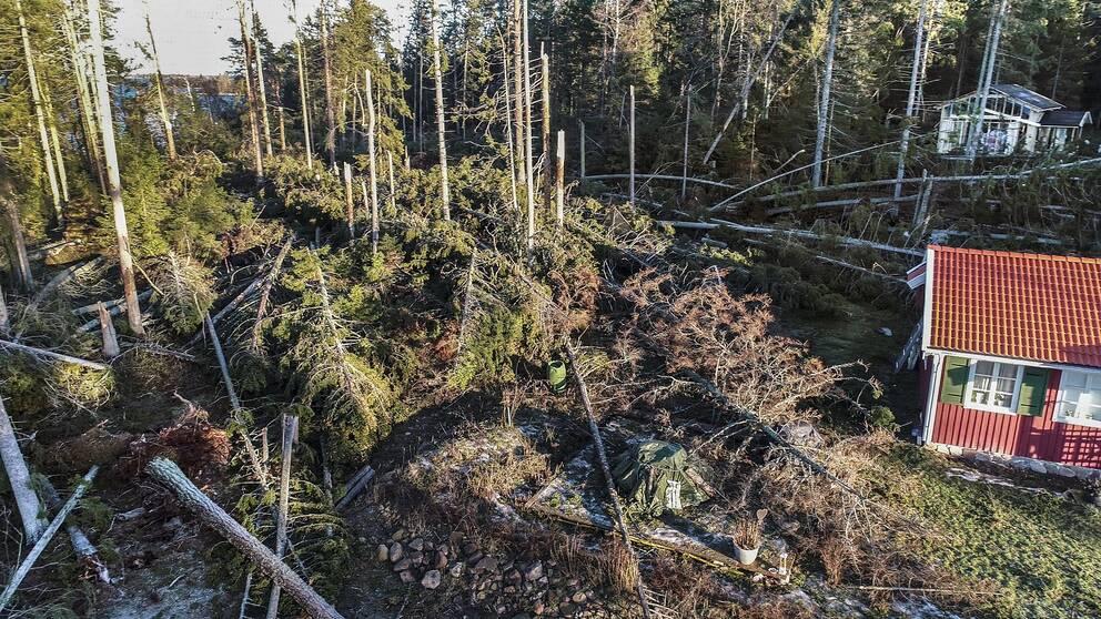 Fallna träd efter Alfrida.