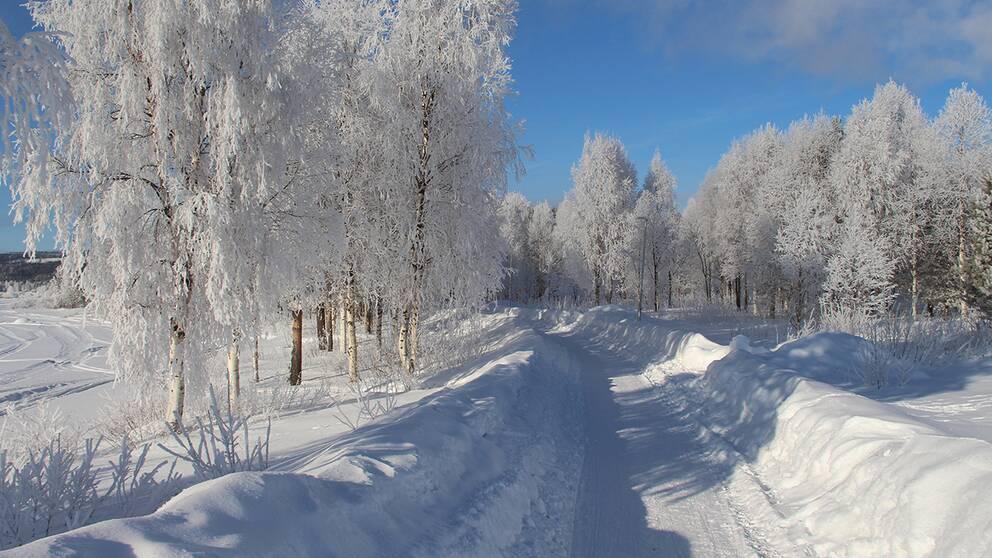 """Hansavan i Överkalix 5 februari. Klarblå himmel och """"bara"""" minus 21."""