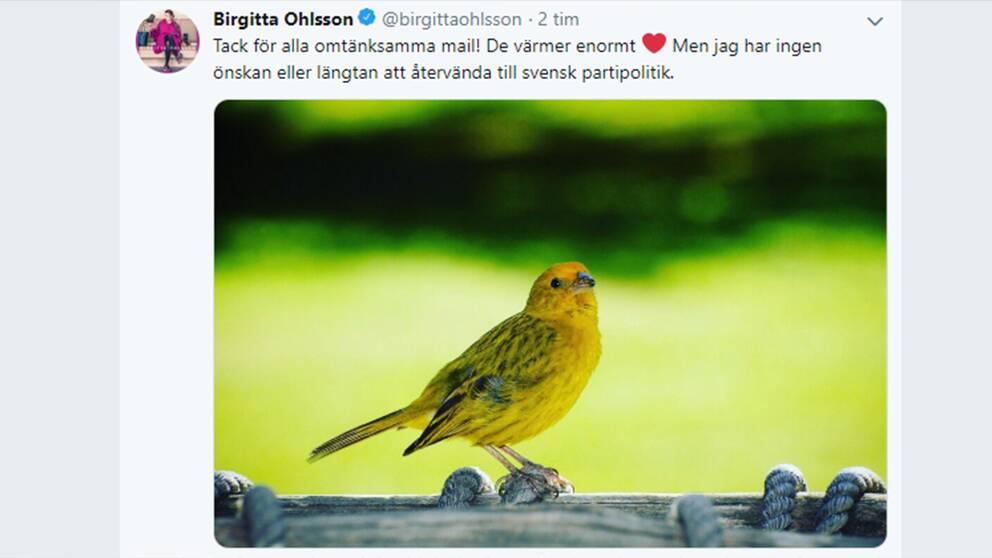 På Twitter skriver Birgitta Ohlsson att hon inte önskar återvända till svensk politik.