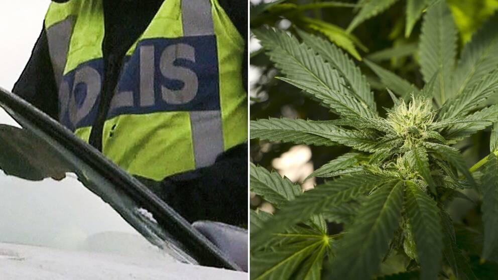 Poliskontroll och marijuana.