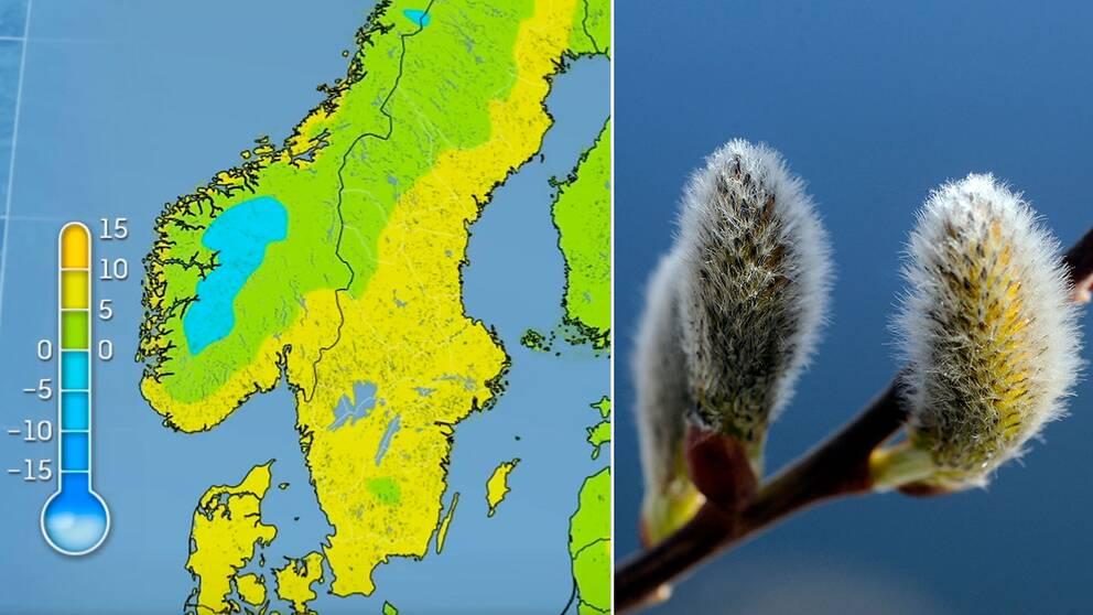 Temperaturen blir nästintill tvåsiffrig i delar av landet i helgen