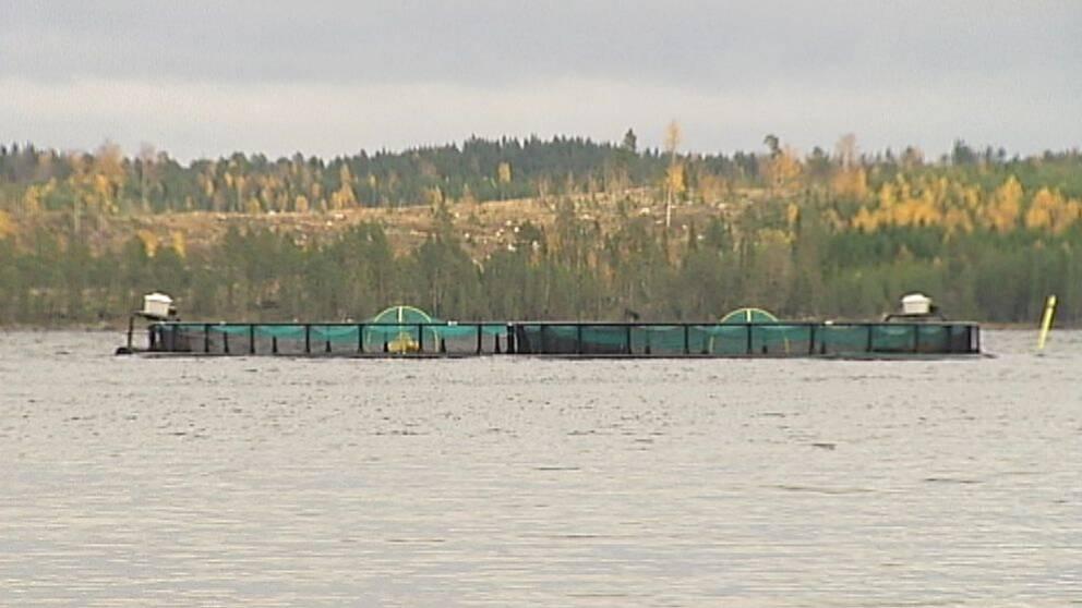 Fiskodlingskasse i vatten på avstånd, skog i bakgrunden, höst