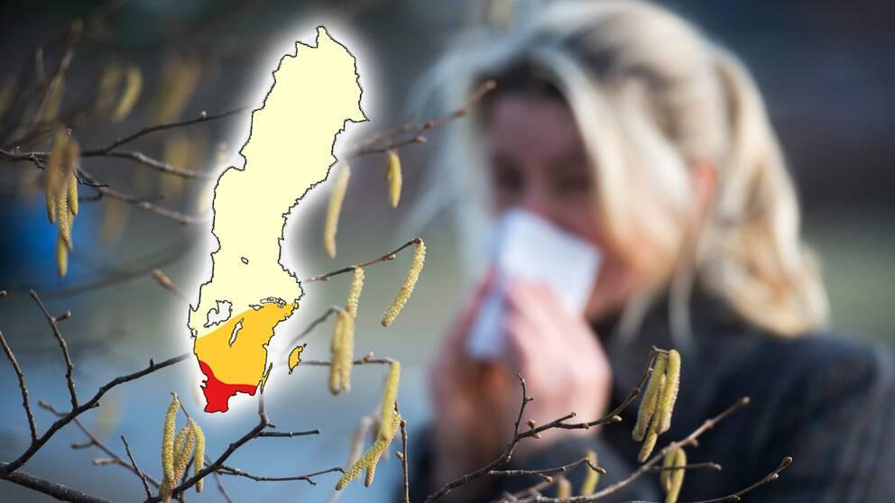 Pollensäsongen väntas under veckan dra igång ordentligt i sydligaste Sverige.